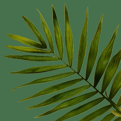 Palme –Incentive Reisen